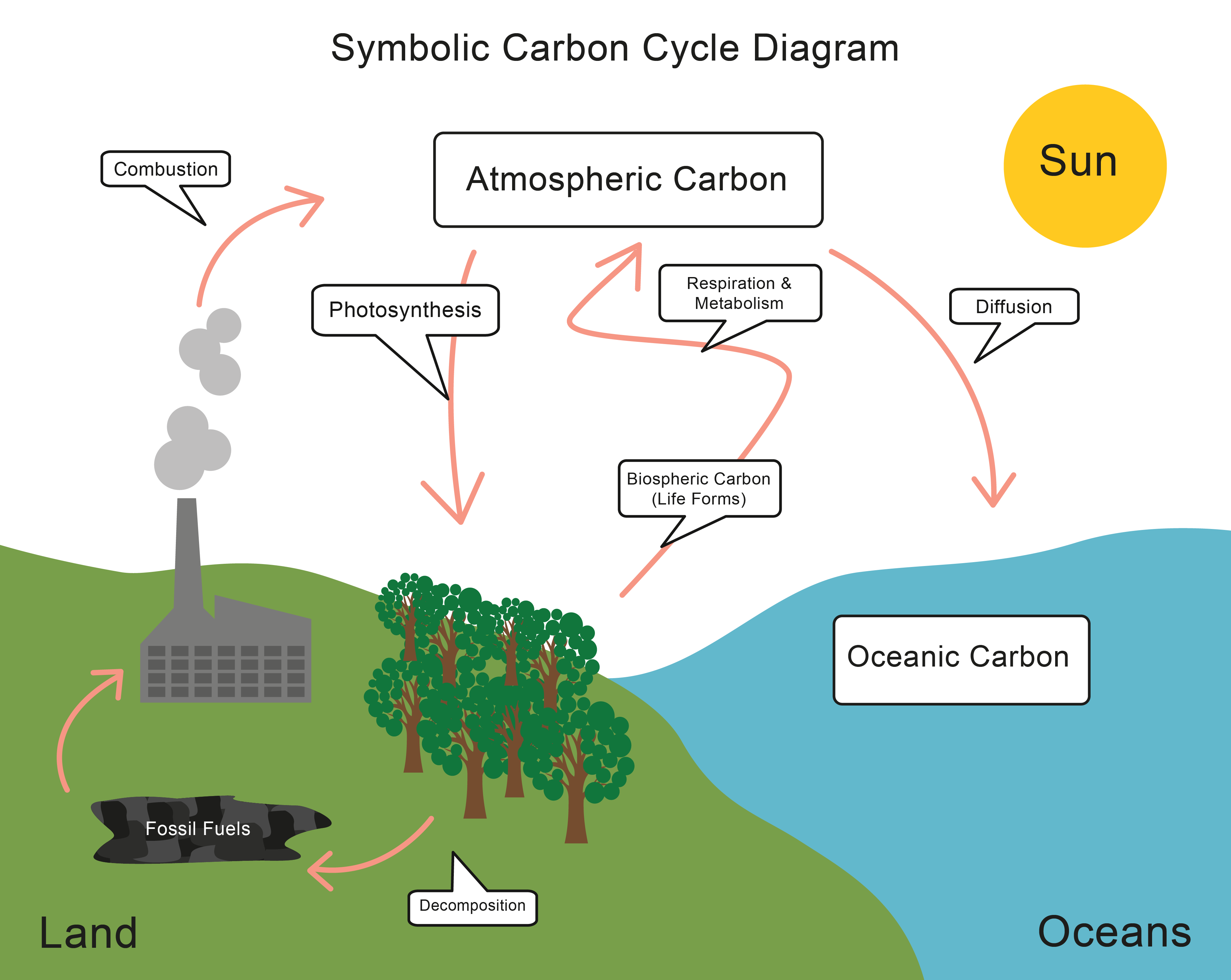Worksheets Carbon Cycle Worksheets energy transfer and the carbon cycle worksheet edplace study picture carefully because you must be able to describe tick three of ways is released into environ