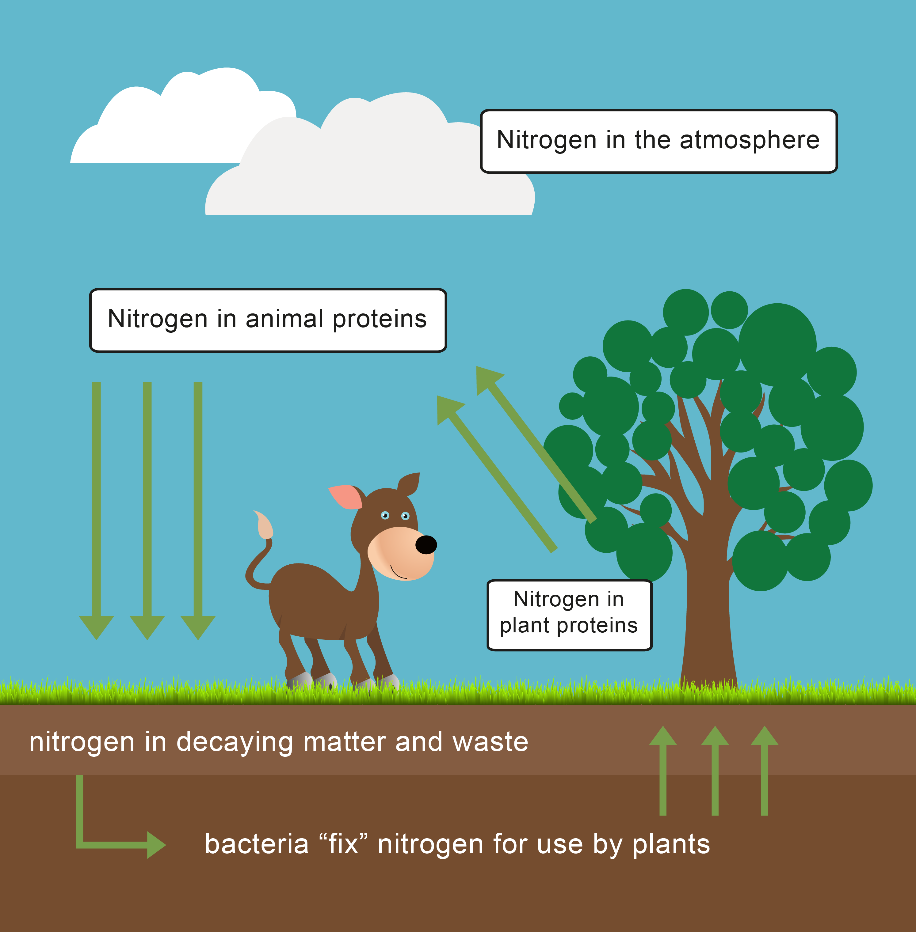 Image source plantsam com - Look At The Picture And Choose The Main Source Of Nitrogen For Plants