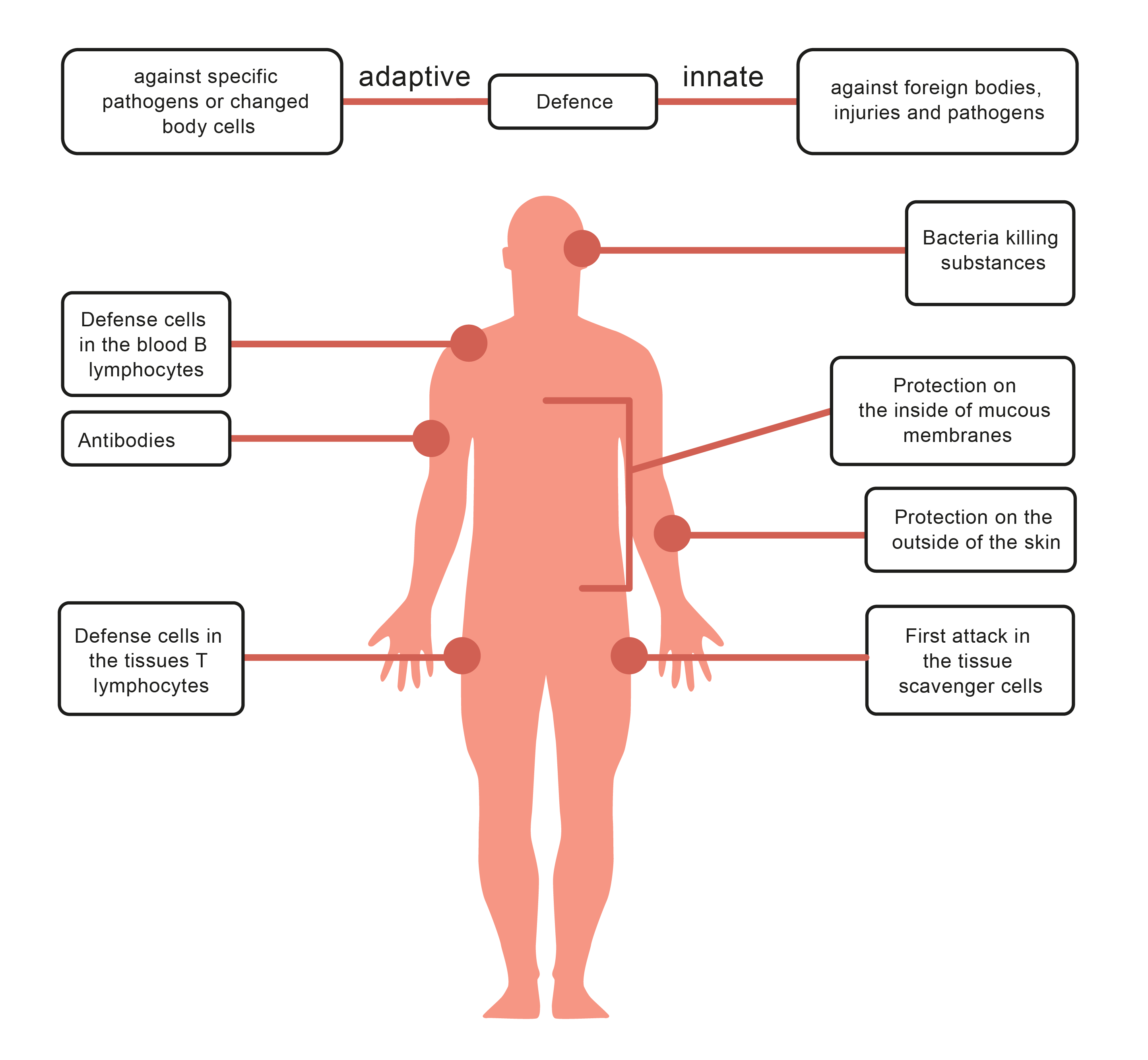worksheet Immune System Worksheets disease and the immune system worksheet edplace look at diagram that shows ways body uses to prevent microorganisms from entering as well weapons once pathogens hav