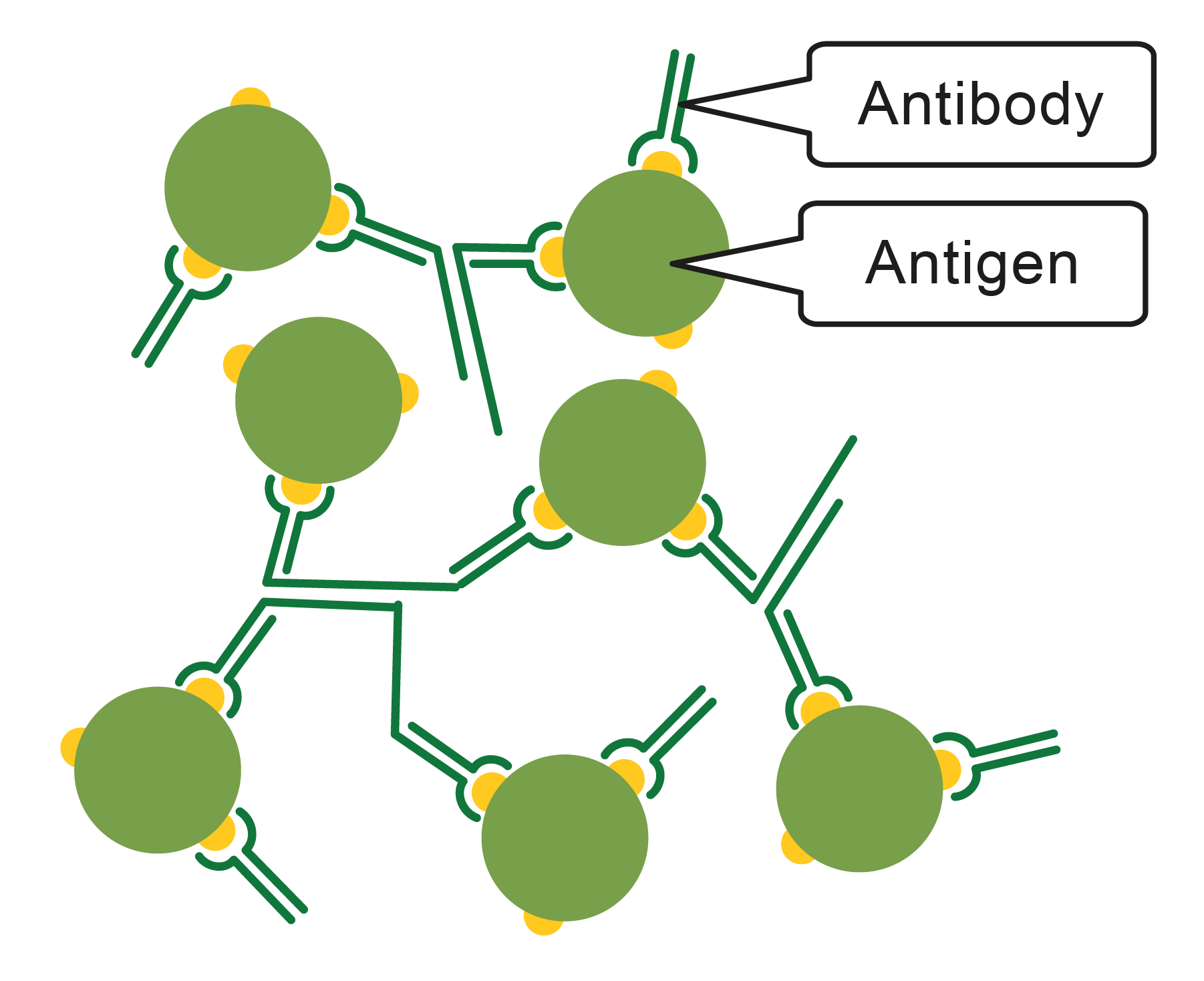Image of antigens and antibody