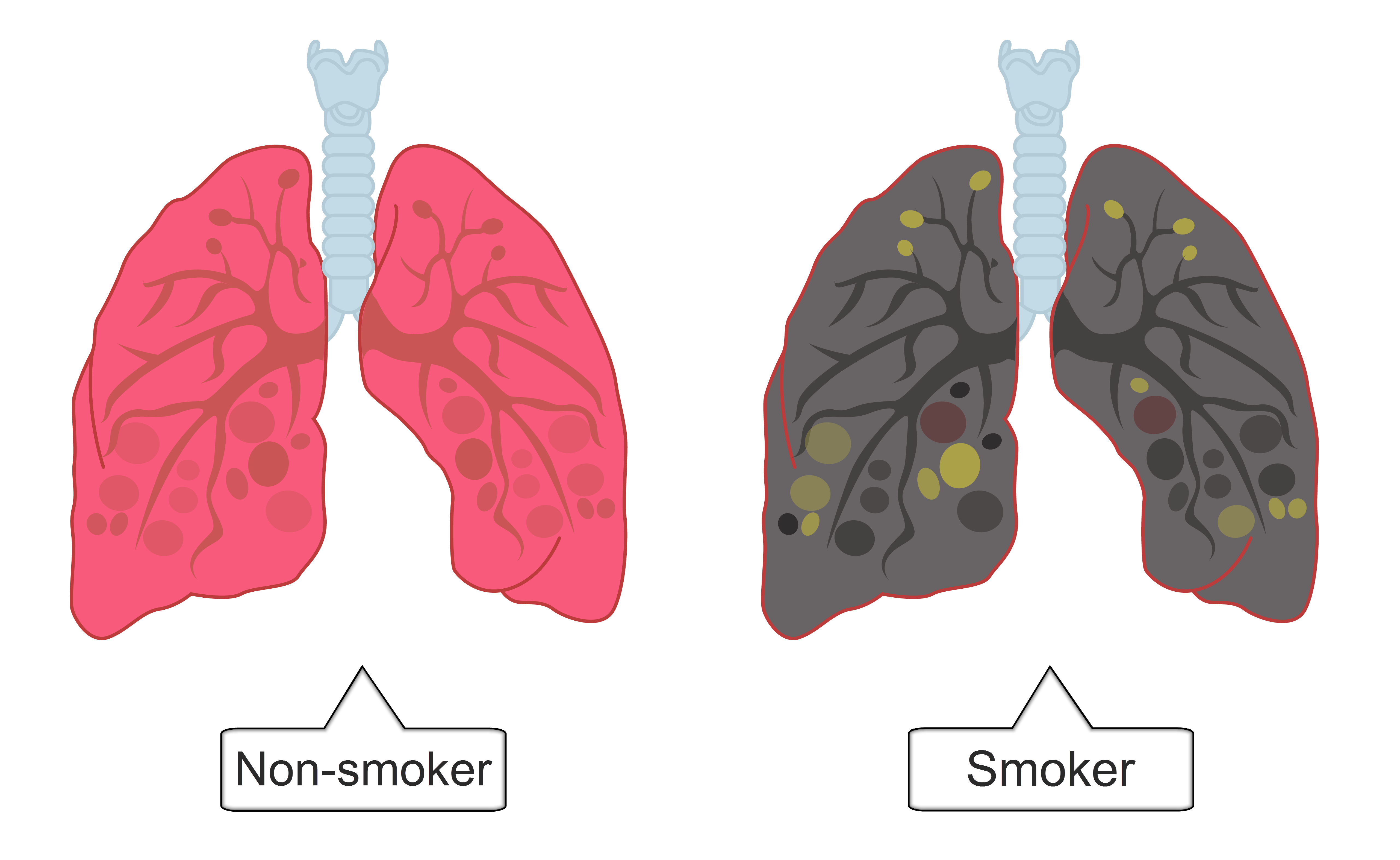 Smoking and Health - worksheet from - Times Tutorials