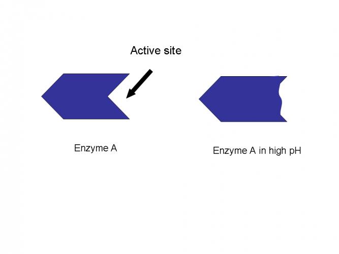 Image of enzyme in high pH