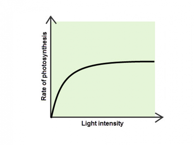 Image of graph showing light as a limiting factor