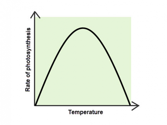 Image of graph showing limiting factor temperature