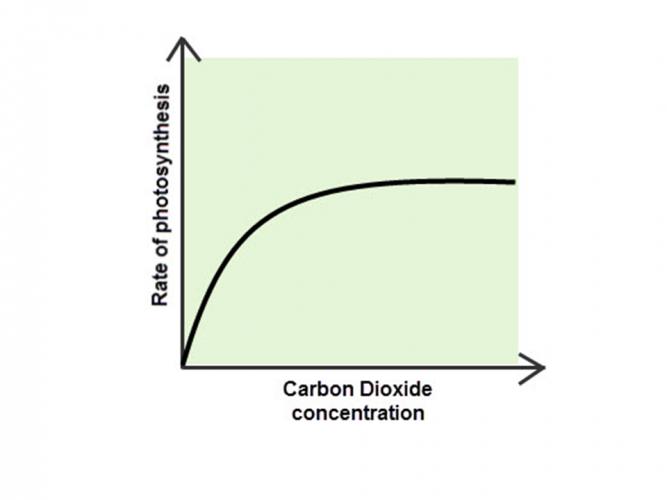 Image of graph showing carbon dioxide as a limiting factor