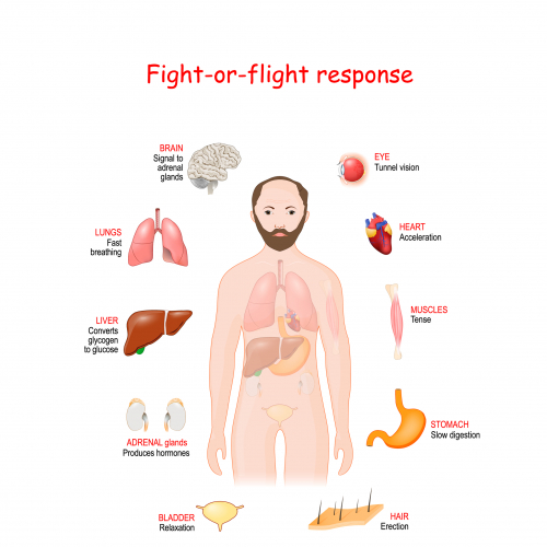 Image of fight or flight response