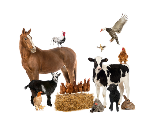 A group of farmyard animals