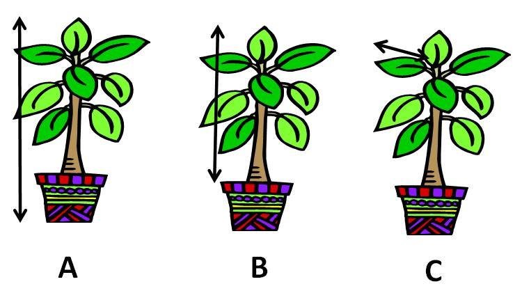 Measuring plants