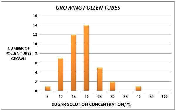 Pollen tube bar chart