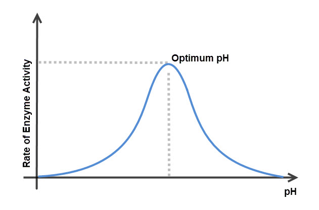 Image of graph showing enzyme activity and pH