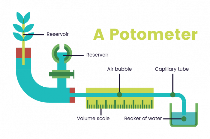 Image of a Potometer