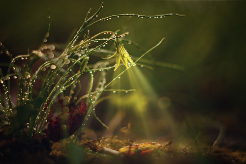 Midsummer night's dream series - Fairies place - stock photo