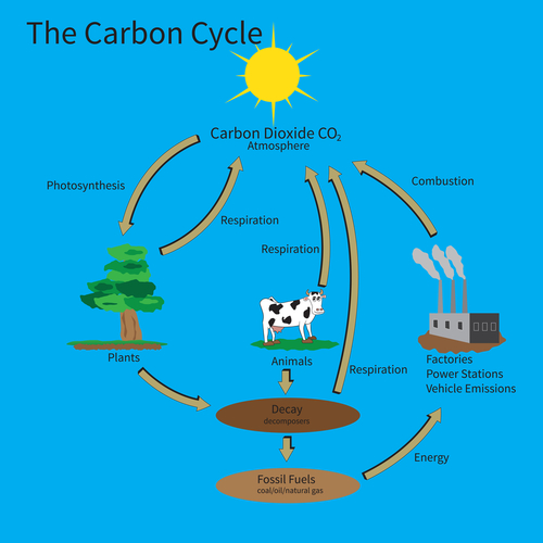 The Carbon Cycle Worksheet Edplace