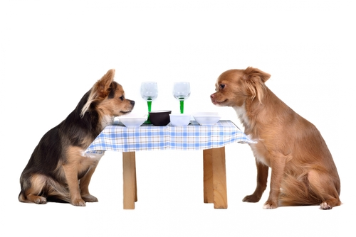 Dogs at table