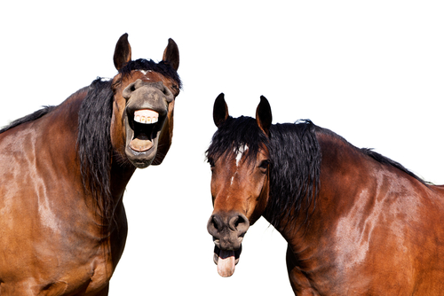 two horses laughing