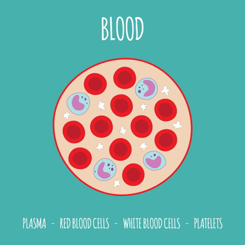 Image of blood composition
