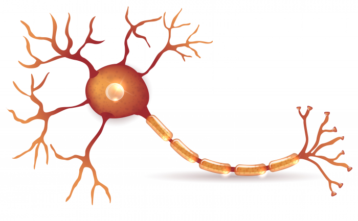 Picture of a nerve cell