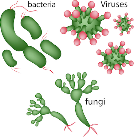 Image of bacteria, virus and fungi