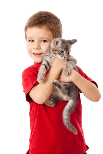 Boy holding a tabby cat