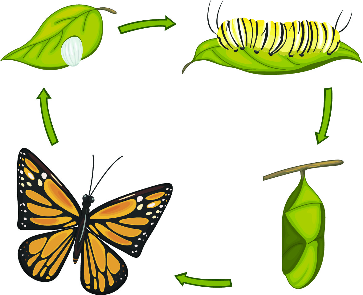 The Life Cycle of a Butterfly Worksheet EdPlace – Life Cycle of a Butterfly Worksheet