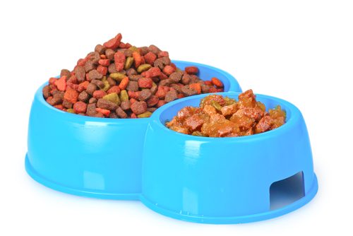 Bowl of cat food