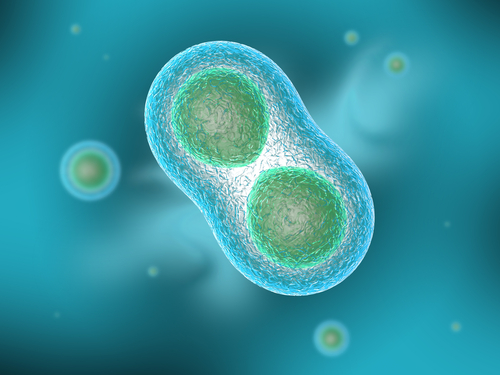 An image of a cell dividing.
