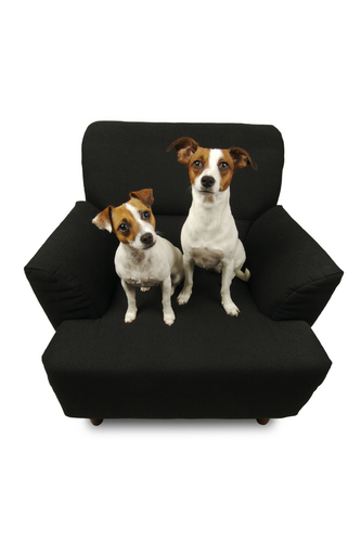 Two dogs on an armchair