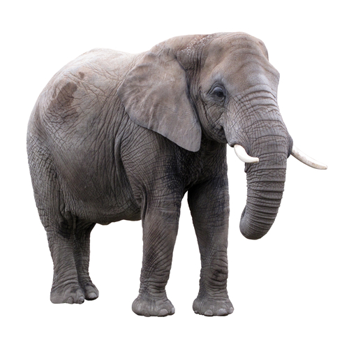 An African Elephant Has A Lot In Common With A Daisy Plant Think About All The Animals And Plants That You Have Learnt About There Are Some Things That