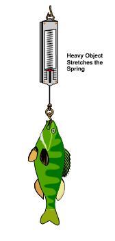 Fish on newtonmeter