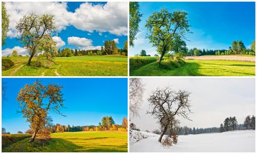 Tree through the seasons