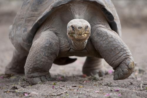 animals that lay eggs - photo #36