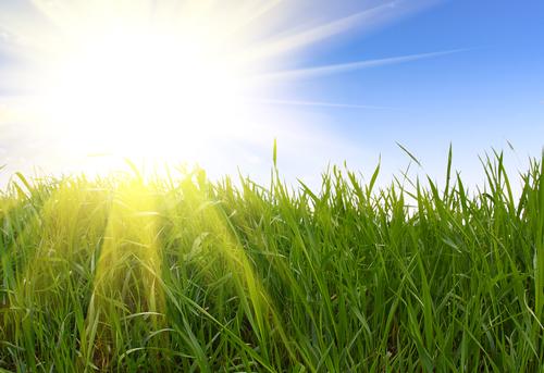Sunshine over field