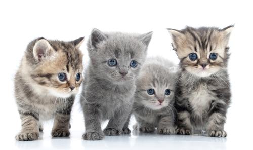 Image of kittens