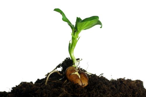 growing plants from seeds worksheet edplace. Black Bedroom Furniture Sets. Home Design Ideas