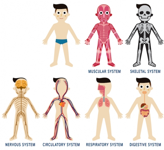 Image of different body systems