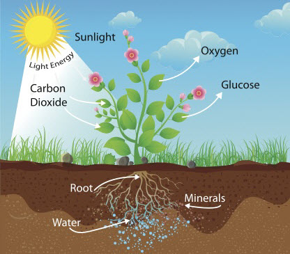 How fertilisers help plants worksheet edplace for Things found in soil
