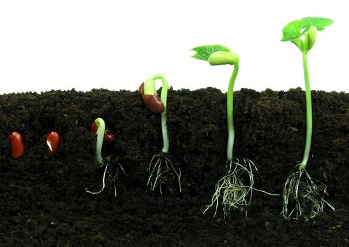 Growing Seeds Worksheet - EdPlace