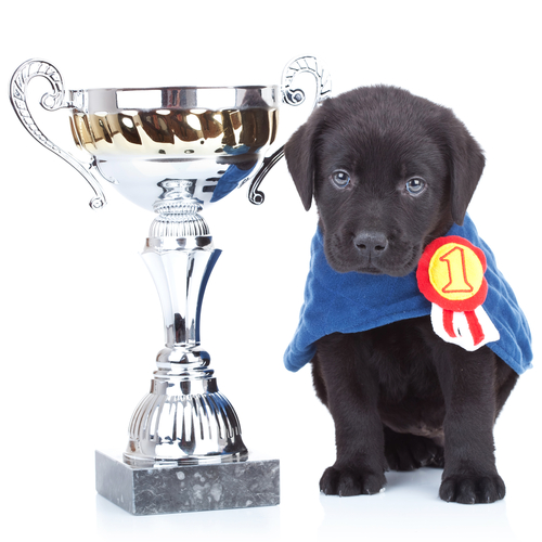 Dog with a trophy
