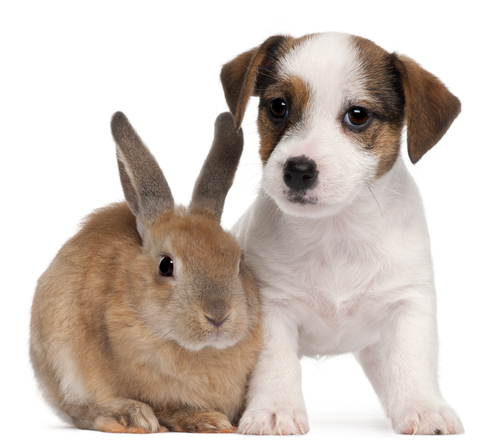 a rabbit and a puppy