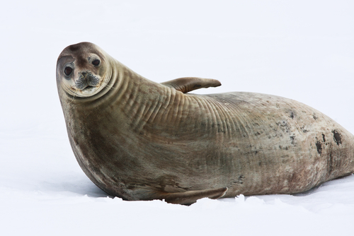 A seal