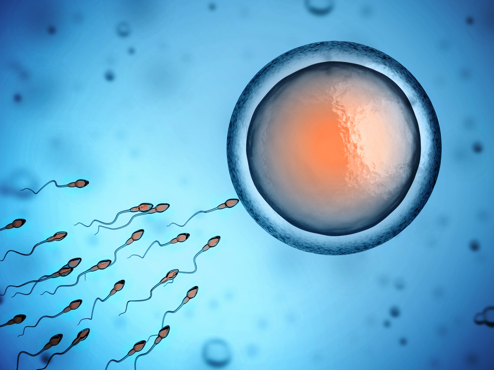 Image of egg and sperm cell