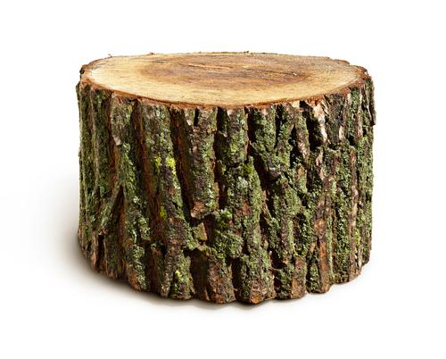 stump of wood