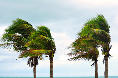 Trees in high wind