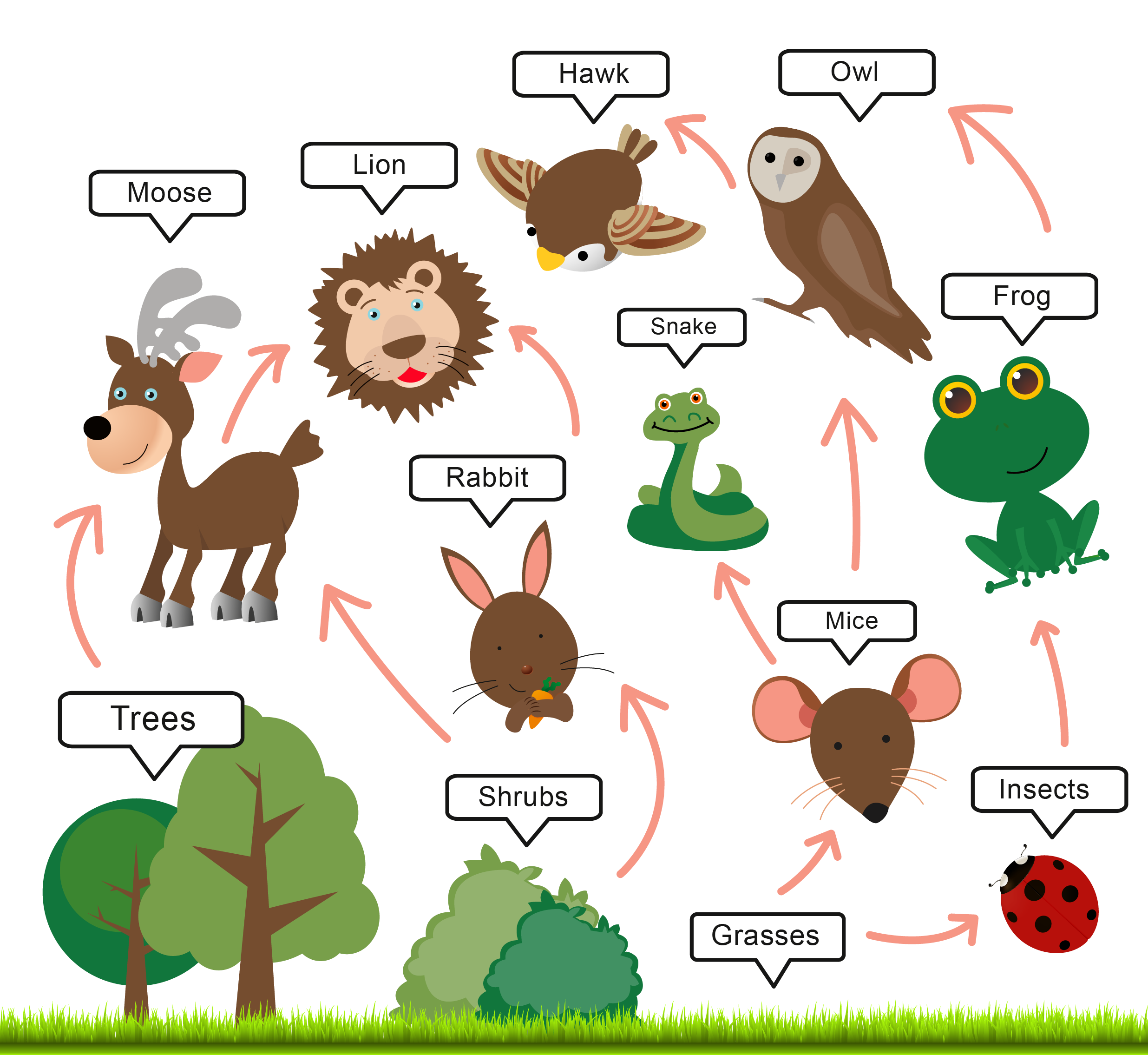 Owl Food Chain submited images.