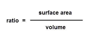 how does the surface area to volume ratio affect heat loss in organisms Heat loss is not only affected by the surface area of an orgnanism, but also by its volume and specifically, the ratio between the two organisms are made up mostly of water and a larger body of water will retain its heat longer.