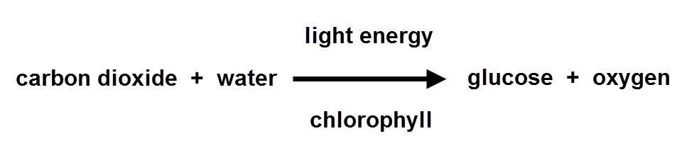 formula for photosythesis Co2 + h2o -- c6h12o2 + o2 carbon dioxide + water -- glucose + oxygen carbon dioxide and water combine to form glucose and oxygen in the forward reaction, which is.